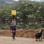Predicted Return of Deadly Locusts Triggers Fear in East Africa